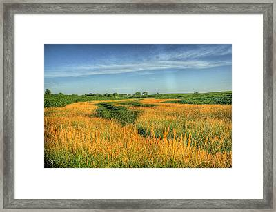 River Of Grass Framed Print