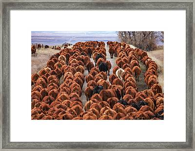 River Of Reds Framed Print by Todd Klassy