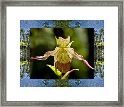 Framed Print featuring the photograph River Orchid by Bell And Todd