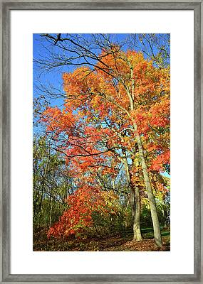 Framed Print featuring the photograph River Road Maples by Ray Mathis