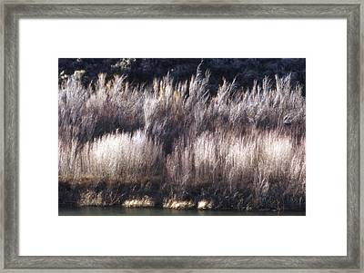 River Sage Framed Print by Lynard Stroud