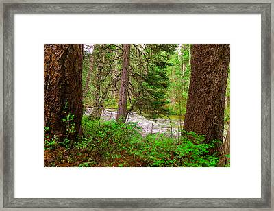 River Through The Forest Framed Print by Jeff Swan