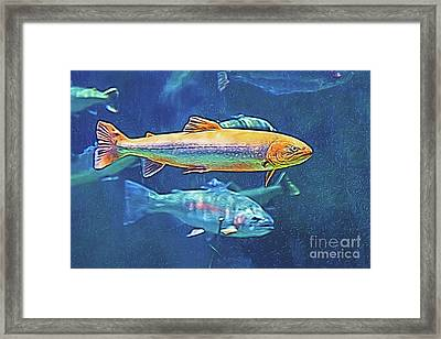 Framed Print featuring the digital art River Trout by Ray Shiu