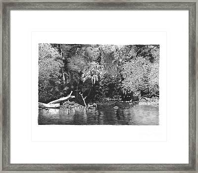 River Trunk Framed Print