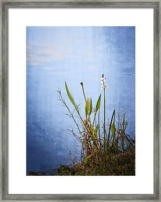 Riverbank Beauty Framed Print by Carolyn Marshall