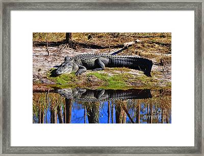 Framed Print featuring the photograph Riverside Reflection by Al Powell Photography USA