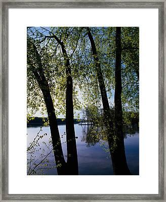 Riverview Through Budding Trees Framed Print