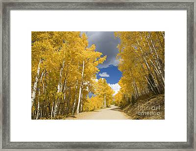 Road Amid Aspens 1 Framed Print