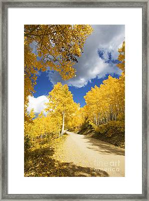 Road Amid Aspens 2 Framed Print