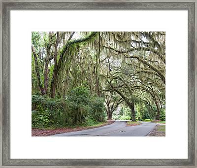Road Beneath The Oaks Framed Print