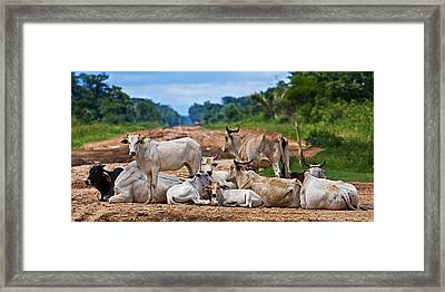 Framed Print featuring the photograph Road Block by Ron Dubin