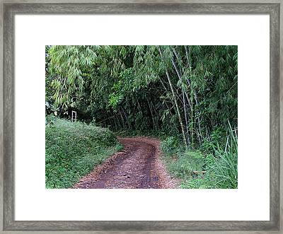 Road Into Bamboo Forest Framed Print by Jack Herrington