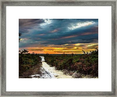 Road Into The Pinelands Framed Print by Louis Dallara