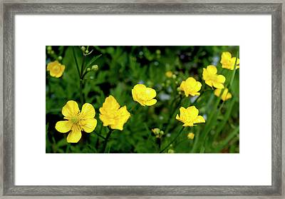 Road Of Flowers Framed Print