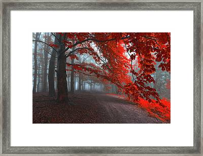 Road Of Seraphines Framed Print by Janek Sedlar