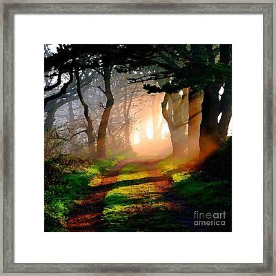 Road Through The Woods Framed Print