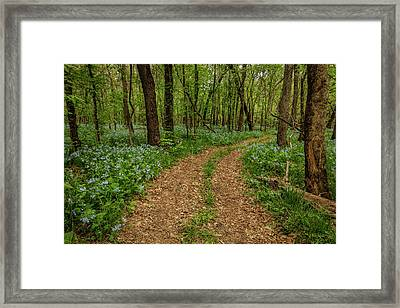 Road Through The Woods Framed Print by Scott Bean