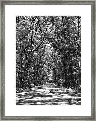 Road To Angel Oak Grayscale Framed Print