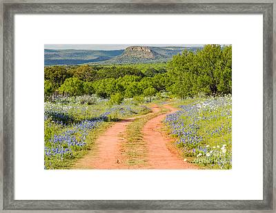 Road To Bluebonnet Heaven - Willow City Loop Texas Hill Country Llano Fredericksburg Framed Print by Silvio Ligutti