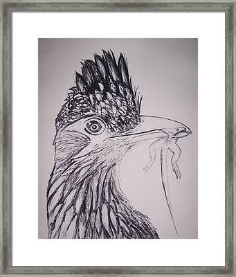 Roadrunner Framed Print by Jude Labuszewski