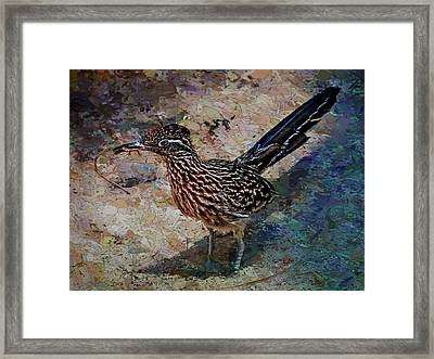Roadrunner Making Nest Framed Print by Penny Lisowski