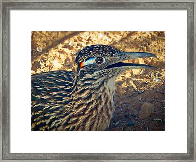 Roadrunner Portrait Framed Print