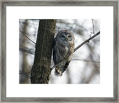 Roadside Barred Owl Framed Print