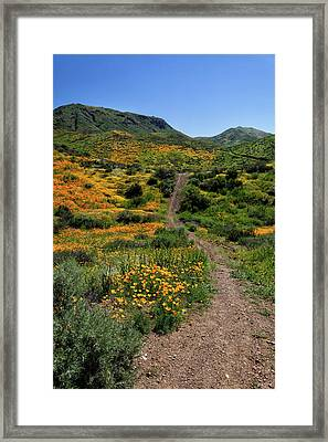 Framed Print featuring the photograph Roadside Flowers by Cliff Wassmann