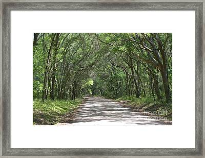 Framed Print featuring the photograph Roadway To Mitchellville Beach by Carol  Bradley