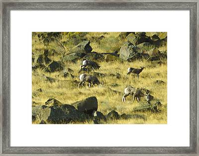 Framed Print featuring the photograph Roaming Free by Dale Stillman