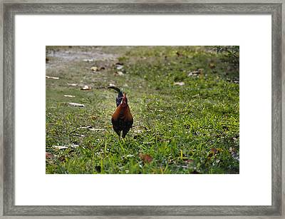 Roaming Free Framed Print by JAMART Photography