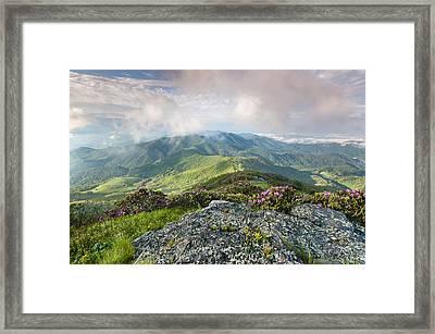 Roan Highlands - Grassy Ridge Rhododendron Framed Print by Mark VanDyke