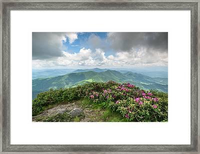 Roan Mountain Highlands Grassy Ridge Rhododendron Framed Print by Mark VanDyke