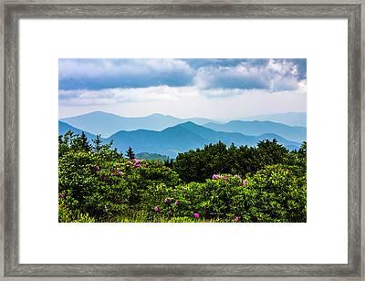 Roan Mountain Rhodos Framed Print by Dale R Carlson