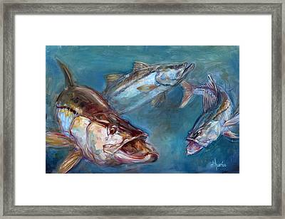 Robalo Framed Print by Tom Dauria