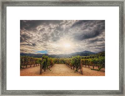 Winery Vineyard - Napa Valley California Framed Print