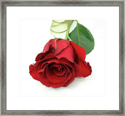 Roberts Single Red Rose Framed Print by Jane Autry