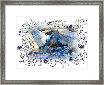 Framed Print featuring the photograph Robin by Athala Carole Bruckner