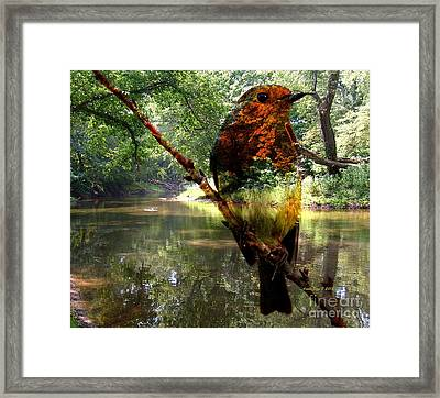 Robin By The River Framed Print