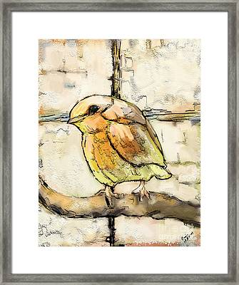 Robin Collage Framed Print