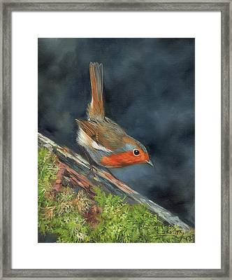 Framed Print featuring the painting Robin by David Stribbling
