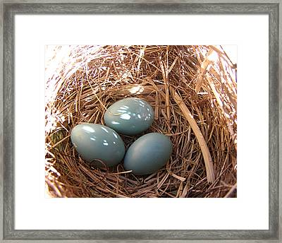 Framed Print featuring the photograph Robin Eggs by Angie Rea