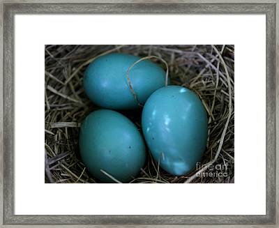 Framed Print featuring the photograph Robin Eggs by Erica Hanel