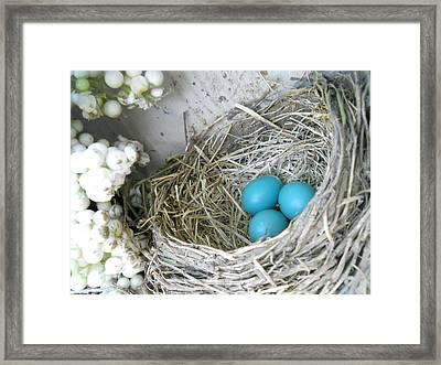 Robin Eggs In A Wreath Framed Print