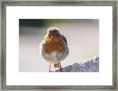 Robin Front Framed Print