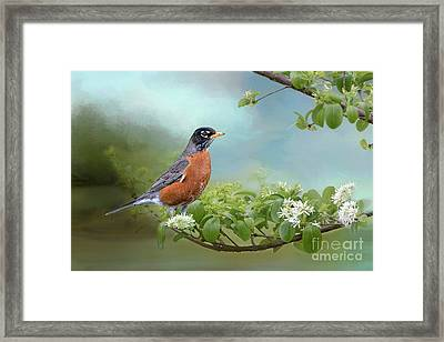 Robin In Chinese Fringe Tree Framed Print by Bonnie Barry