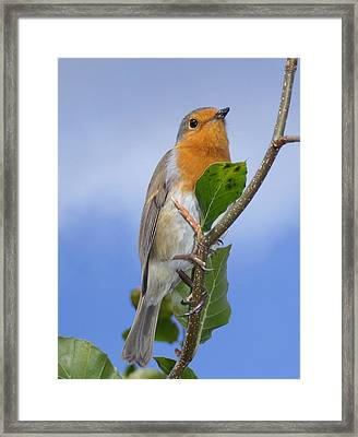 Robin In Eden Framed Print