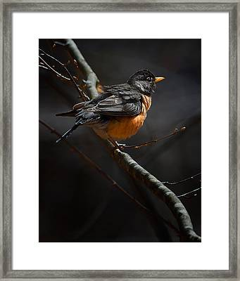 Robin In The Light Framed Print by Bill Wakeley