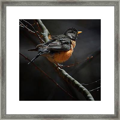Robin In The Light Square Framed Print by Bill Wakeley