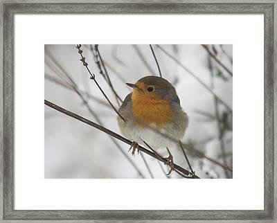 Robin In The Snow Framed Print